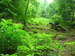 مخاطرات درختکاری          2 1