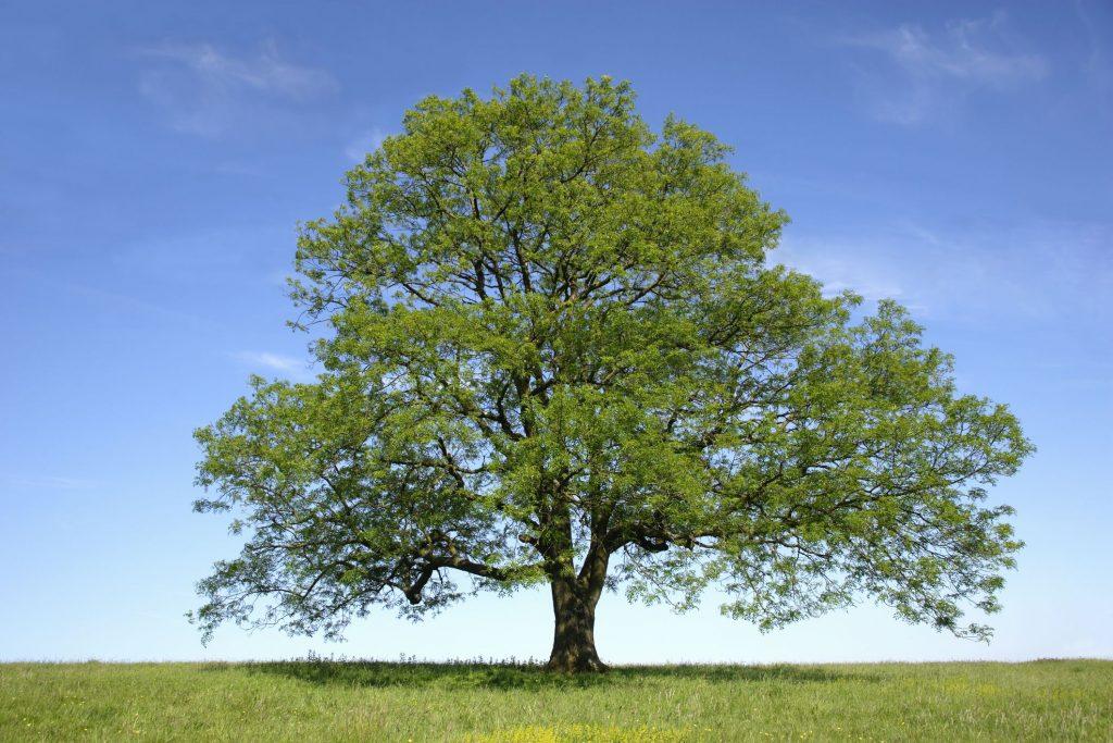 مخاطرات درختکاری GettyImages 200443720 0011 59a2f08fd088c000111be4f4 1024x683