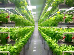 تا سال 2050، انتظار میرود که جمعیت جهان 2میلیارد دیگر افزایش یابد، و تامین تغذیه برای این حجم از انسان ها یک چالش اساسی میباشد. به دلیل رشد صنعتی و شهری شدن زندگی عموم انسان ها، ما هر روز در حال از دست دادن زمین های مناسب برای کشاورزی هستیم. دانشمندان میگویند که تنها در طی 40 سال گذشته، کره زمین چیزی در حدود یک سوم از زمین های قابل کشت خود را از دست داده است. ما نمیدانیم که در 40 سال آینده چه مقدار از زمین های قابل کشاورزی امروز از دست خواهند رفت. با توجه به افزایش تقاضا برای غذا به همراه کاهش زمین های قابل کشاورزی یکی از جدی ترین چالش های روبروی نسل بشر برای ما آشکار میشود. بسیاری بر این باورند که کشاورزی عمودی راه حل این چالش است. اما سوالی که مطرح میشود این است که کشاورزی عمودی چیست؟  کشاورزی عمودی به تولید فرآورده های غذایی برروی سطوح شیبدار عمودی گفته میشود، به جای پرورش گیاهان یا دیگر فرآورده های غذایی در یک سطح افقی مانند گلخانه ها و یا زمین های کشاورزی، این متد به تولید غذا بر روی سطوح عمودی روی هم قرار گرفته به صورت لایه ای مانند آسمان خراش ها یا انبار های تغییر یافته تمرکز میکند. این ایده مدرن با بهره بری از تکنولوژی محیط کنترل شده کشاورزی یا به اختصار CEA به کشاورزی داخل منازل میپردازد. کنترل هوشمند دما، نور، رطوبت و گاز ها تولید غذا و دارو ها را در یک فضای داخلی ممکن میکند. از بسیاری از جهات کشاورزی عمودی مشابه گلخانه های با کنترل کننده های هوشمند میباشد. هدف اول و اصلی کشاورزی عمودی تولید بیشینه مقدار محصولات کشاورزی در یک فضای محدود میباشد.  در کشاورزی عمودی چهار وجه اصلی وجود دارد:  نقشه مکان مورد استفاده و نحوه استفاده از فضای آن نورگیری و نورپردازی محل عوامل رشد پایداری ویژگی ها کشاورزی عمودی چیست کشاورزی عمودی چیست؟ shutterstock 1267972453 768x576 1 300x225
