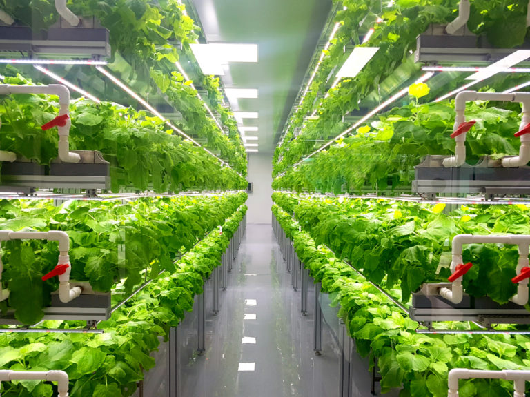 کشاورزی عمودی چیست کشاورزی عمودی چیست؟ shutterstock 1267972453 768x576 1