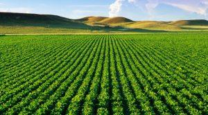 یکی از روش های کشاورزی، روش کشاورزی تک محصولی یا اصطلاحا مانوکالچر(Monoculture) میباشد. کشاورزی تک محصولی روش های کشاورزی مدرن-کشاورزی تک محصولی agricultural field with healthy vegetation 300x166