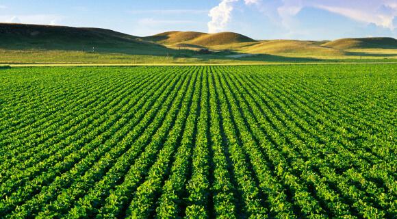 یکی از روش های کشاورزی، روش کشاورزی تک محصولی یا اصطلاحا مانوکالچر(Monoculture) میباشد. کشاورزی تک محصولی روش های کشاورزی مدرن-کشاورزی تک محصولی agricultural field with healthy vegetation