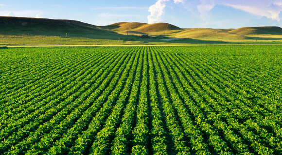 یکی از روش های کشاورزی، روش کشاورزی تک محصولی یا اصطلاحا مانوکالچر(Monoculture) میباشد. یادداشت ها یادداشت ها agricultural field with healthy vegetation