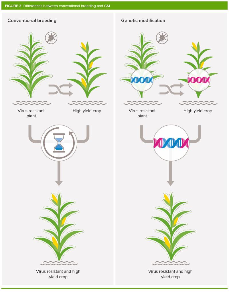 اصلاحات ژنتیکی یا اصطلاحا GM تکنولوژی ای میباشد که شامل تزریق دی ان ای به ژنوم یک ارگانیسم است. برای تولید یک محصول اصلاح ژنتیکی شده باید دی ان ای جدیدی به سلول های محصول انتقال پیدا کنند. معمولا پس از این مرحله به پرورش سلول ها پرداخته میشود تا تبدیل به گیاهان و محصولات مدنظر شوند. دانه هایی که از این محصولات و گیاهان بوجود می آیند دی ان ای اضافه شده در مرحله قبلی را به ارث میبرند. یادداشت ها یادداشت ها figure 3 800 px