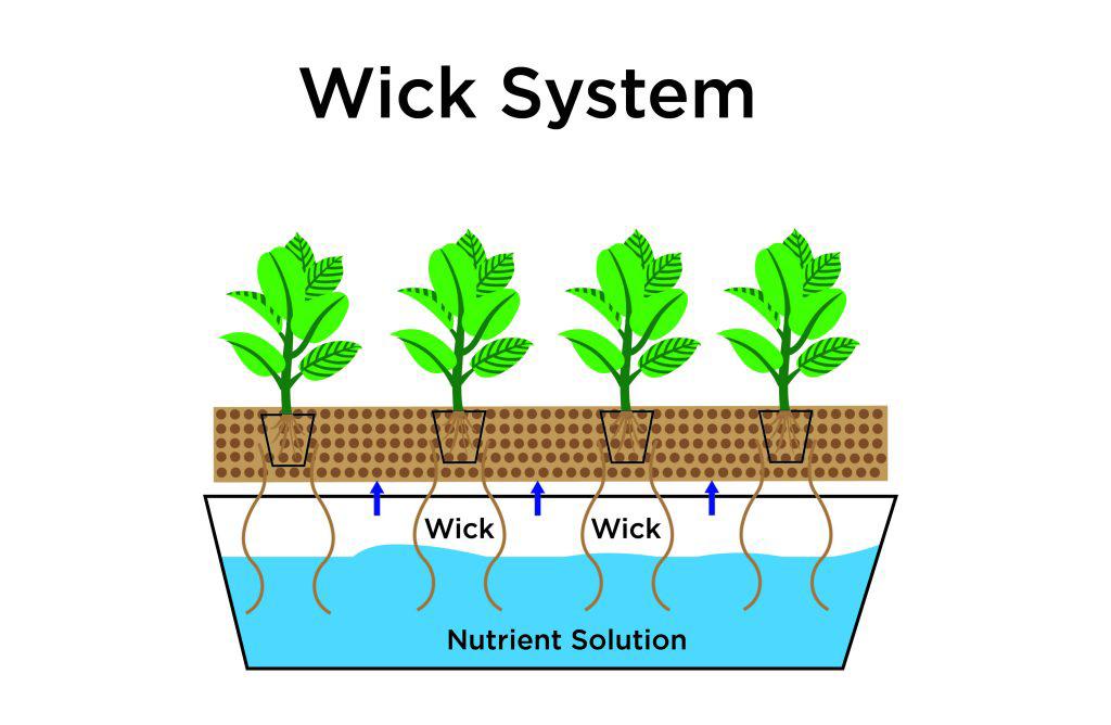 سیستم های هیدروپونیک سیستم های کشت هیدروپونیک سیستم های کشت هیدروپونیک 1