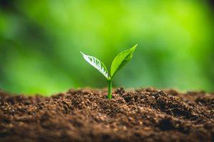 مدیریت ریسک در کشاورزی مدیریت ریسک در کشاورزی مدیریت ریسک در کشاورزی file 20201203 15 meqnib 300x200