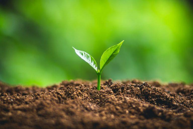 مدیریت ریسک در کشاورزی