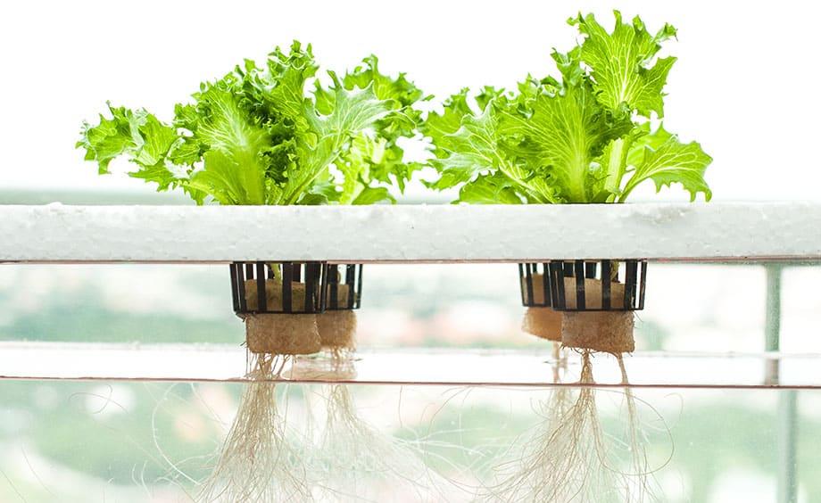 کشت هیدروپونیک یک شیوه برای رشد گیاه است که در آن نیازی به استفاده از خاک نیست و از آب برای تامین نیاز های اساسی گیاه استفاده می شود. در این سری مقالات به نکاتی پیرامون این نوع کشت خواهیم پرداخت. کشت هیدروپونیک کشت هیدروپونیک hydroponics why a good idea