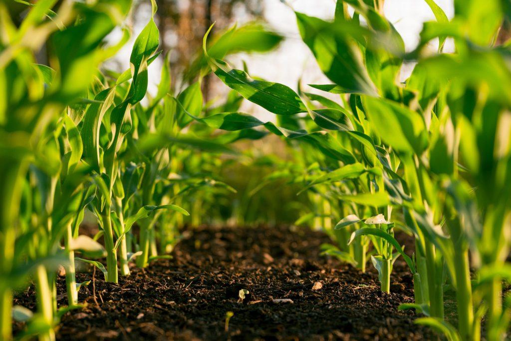 ریسک بازاریابی یا بازار فروش در کشاورزی ریسک بازاریابی و بازار فروش ریسک بازاریابی و بازار فروش steven weeks dupfowqi6oi unsplash 1024x683