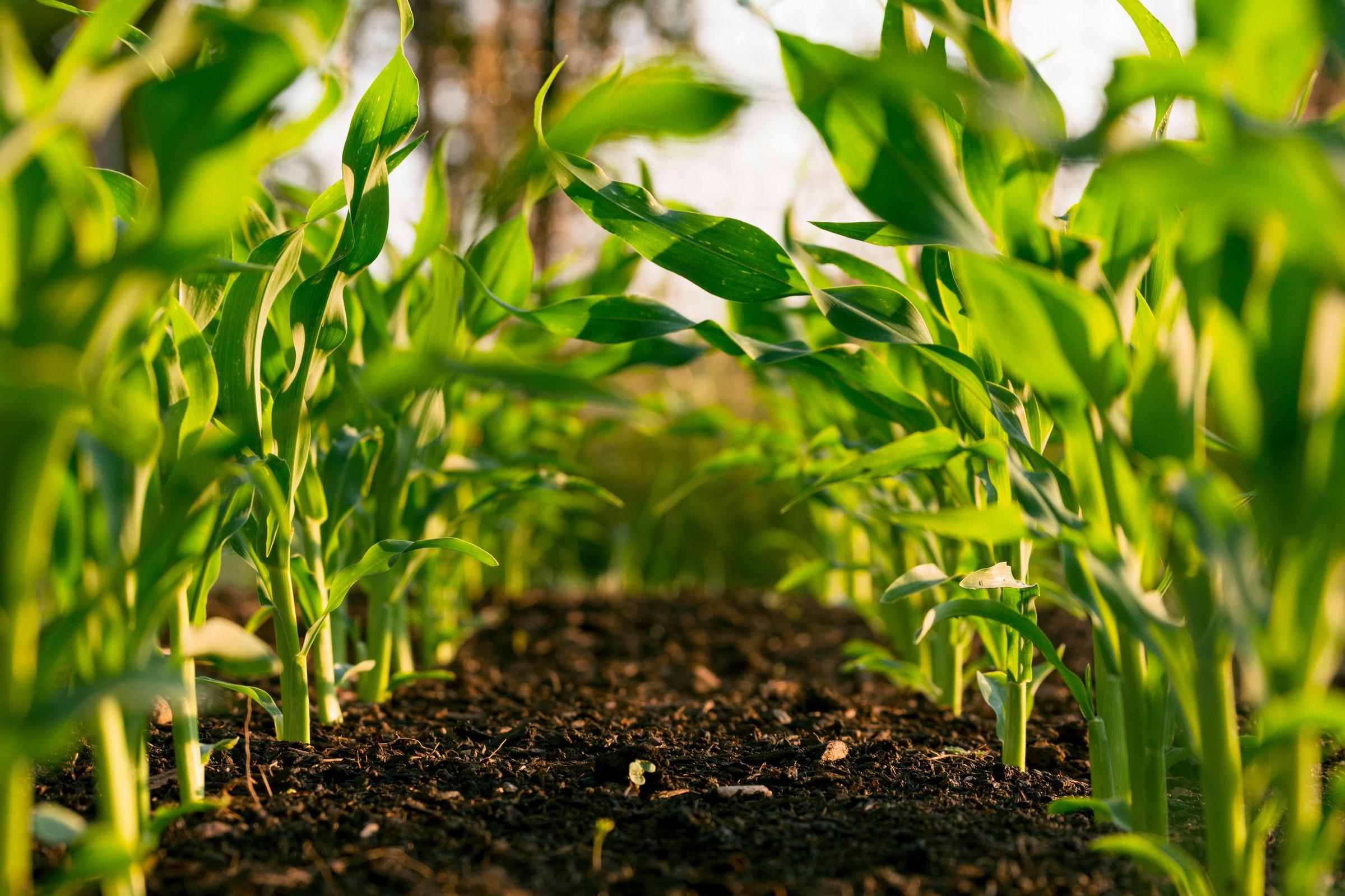 ریسک بازاریابی یا بازار فروش در کشاورزی